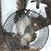 Mission Impossible Squirrel by sherrihendricks98