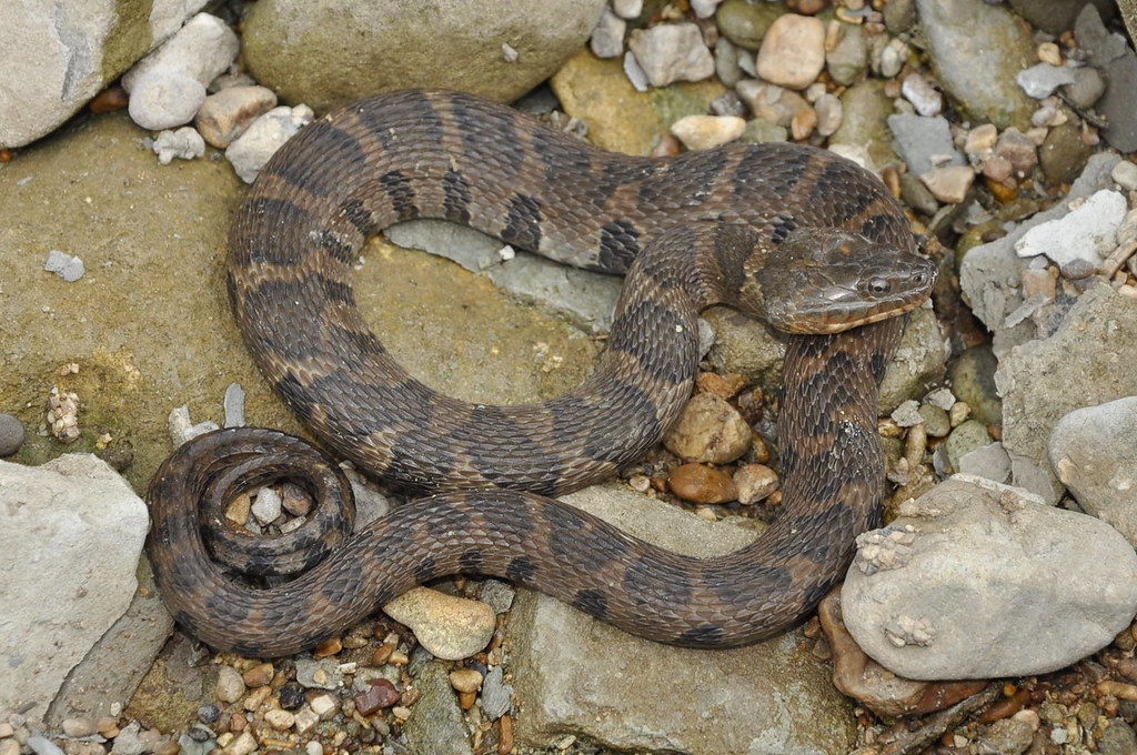 Snake Thread 2016 Page 3 | TexAgs