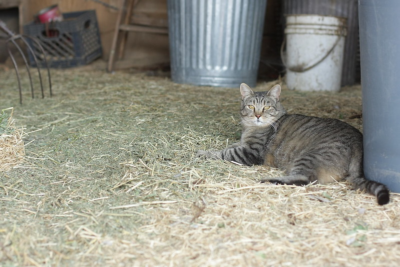 Freer Organics - barn cat