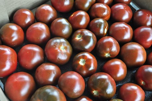 tomato sauce 12