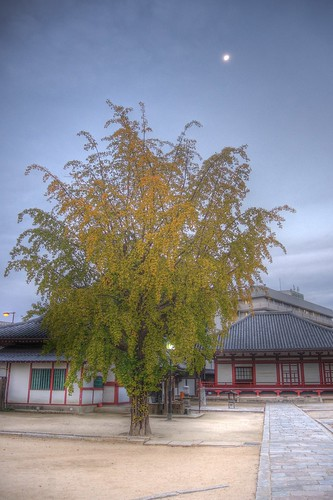 Shitennoji-Temple, Osaka on OCT 31, 2015 (16)
