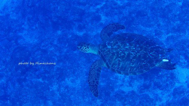 黒島ブルーの中、カメちゃんと一緒に潜降♪