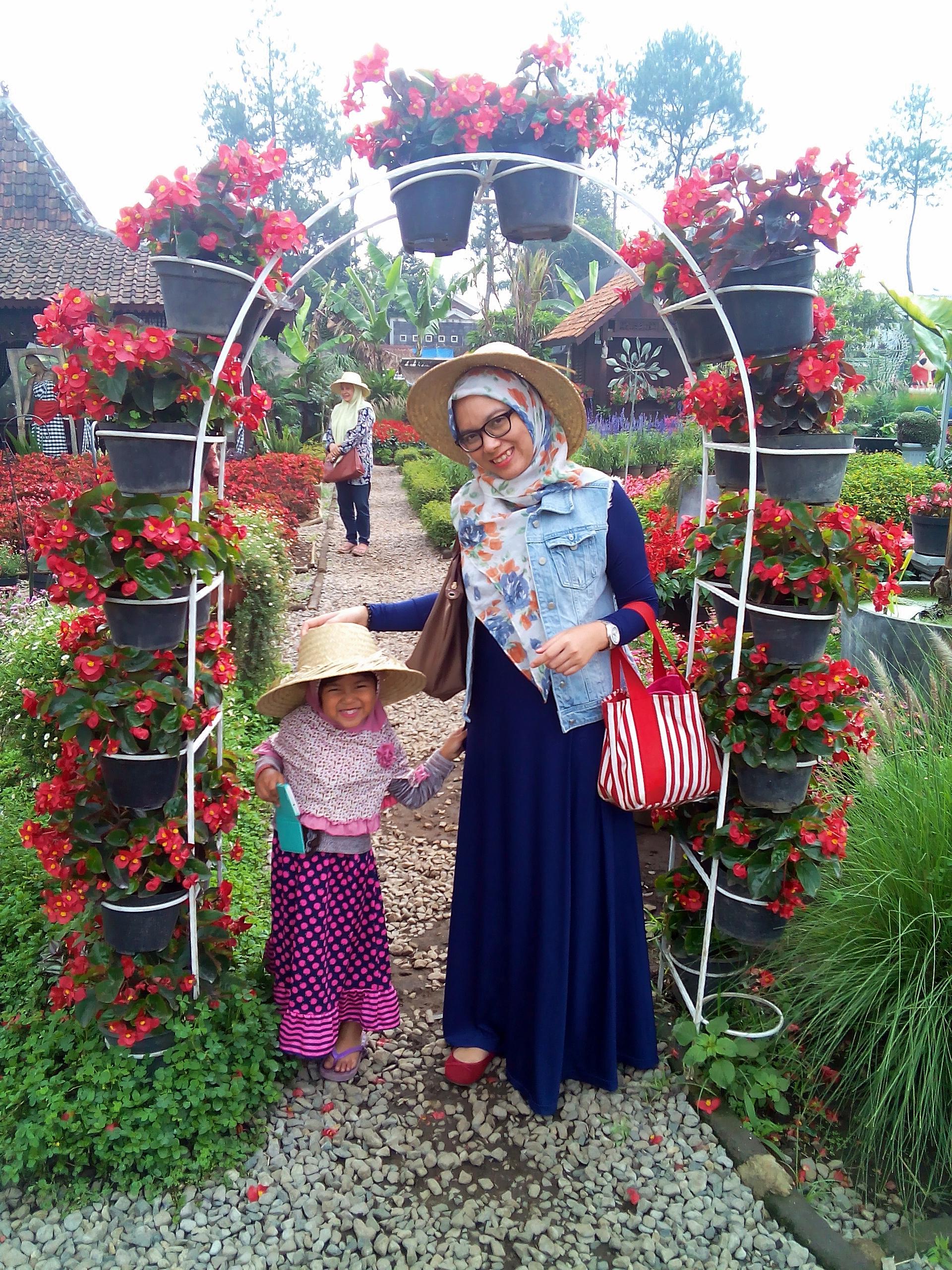 kebun-bunga-begonia-3
