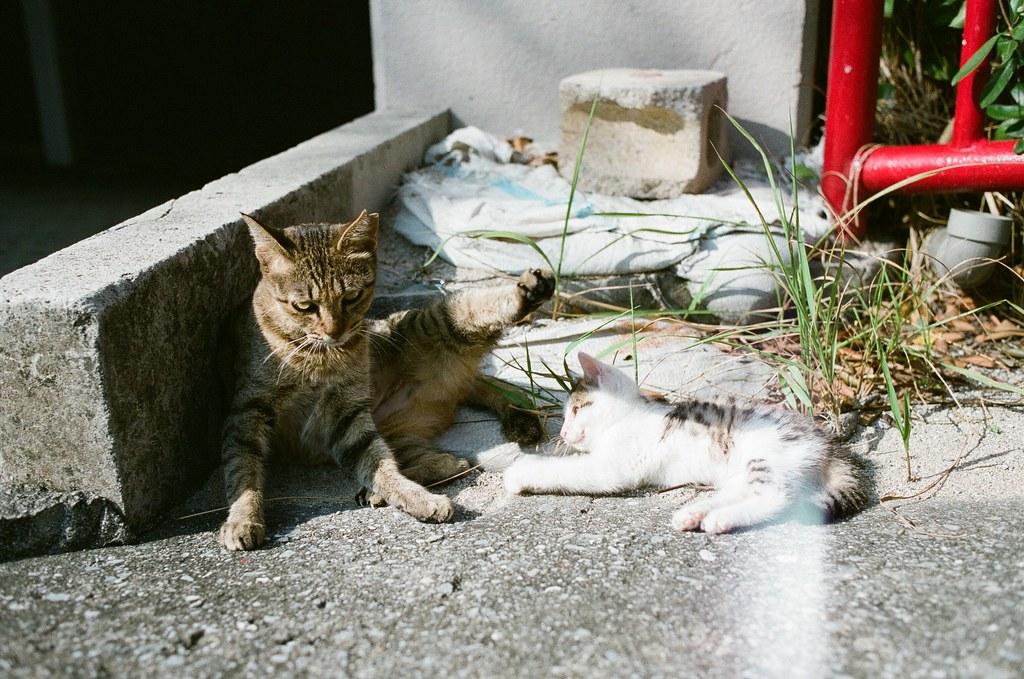 波上宮 沖繩 Okinawa 2015/10/25 路旁的貓媽媽與小貓。  Nikon FM2 Nikon AI AF Nikkor 35mm F/2D FUJICOLOR PRO 400H 2192-0030 Photo by Toomore