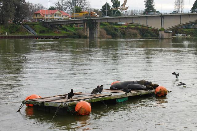 mercado-fluvial-valdivia4