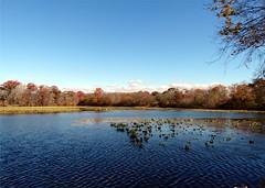 Wantagh - Twin Lakes Preserve - Autumn (3)