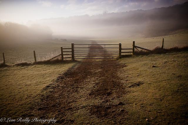 Misty Morning Light-13