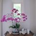 Orchid off-centre by graeme37