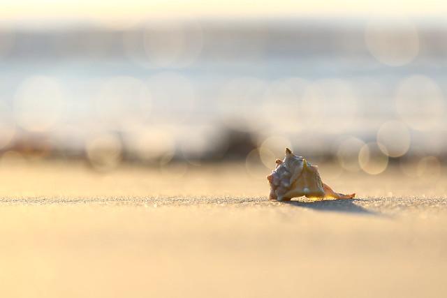 The seashell on the seashore