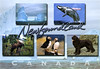 postcard - Newfoundland by Jassy-50