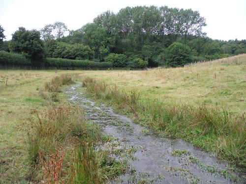 Oddford Brook (II)