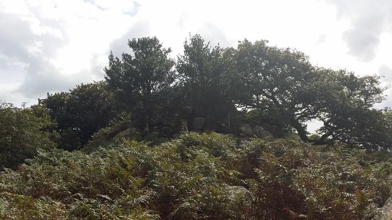 Whitehill Tor #sh