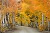 Eastern Sierra Color by Kirk Lougheed