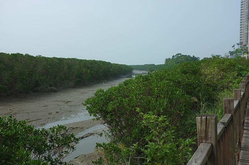 紅樹林自然步道DSCF6143