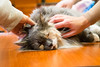 animal-therapy-1040109