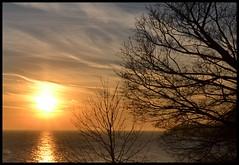 Sun side Tree