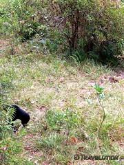 Sun Bear, Matang Wildlife Rehabilitation Centre