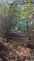 Flatwoods Park