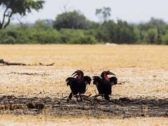 Hwange National Park, direction Main Camp birds  and Landscape