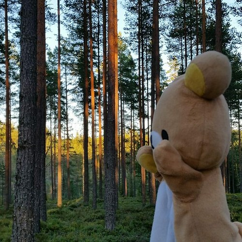 Will miss the beautiful surroundings of rural Sweden a lot... #sweden #nature #forest #rilakkuma #traveller