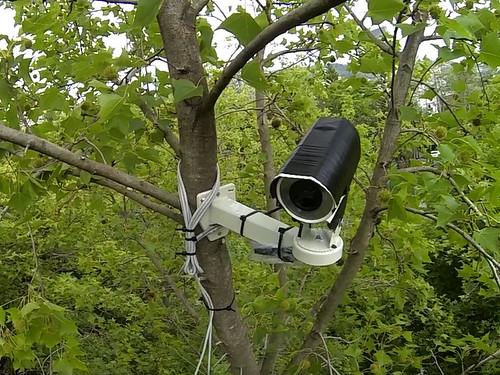 巢位監視器。圖片來源:台灣猛禽研究會。