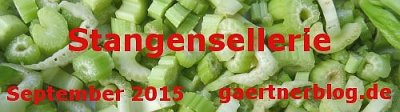 Garten-Koch-Event September 2015: Stangensellerie [30.09.2015]