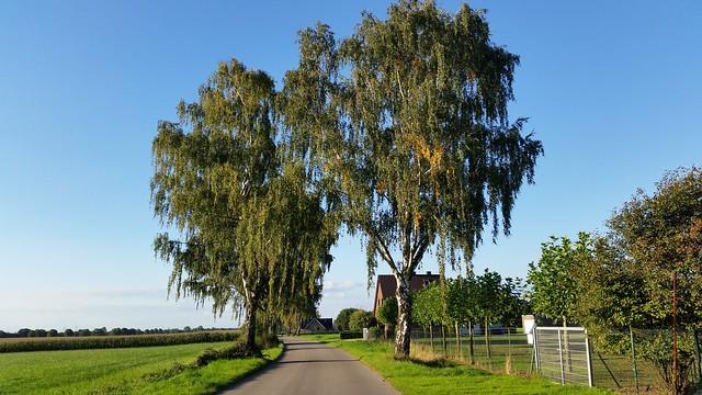 Die Bäume sagen: Der Herbst steht bevor
