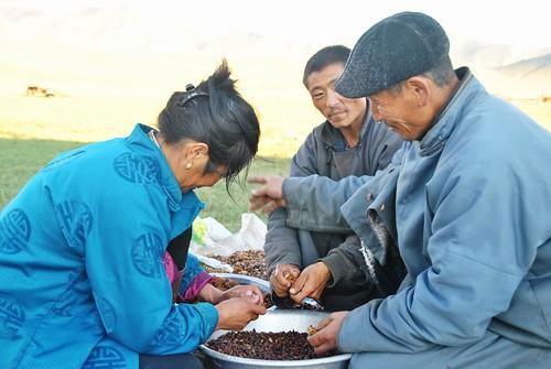 169 Viaje al oeste de Mongolia (98)
