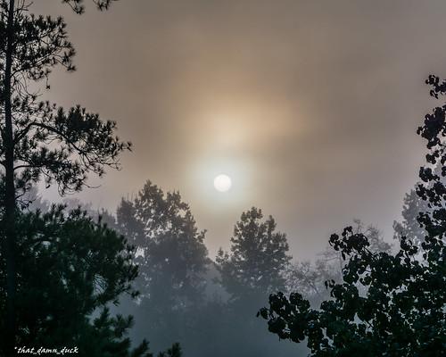 sc nature fog sunrise unitedstates foggy southcarolina surreal naturephotography