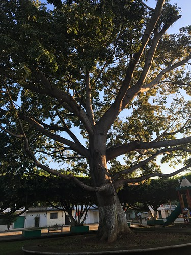 Ceiba #notouch #nofilter #morning