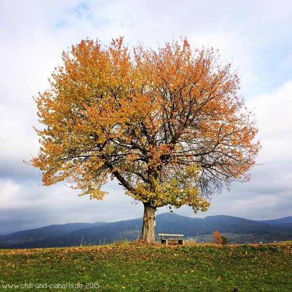 Baum mit Bank bei Tresdorf