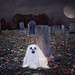 Boo!  44/52 by Boered