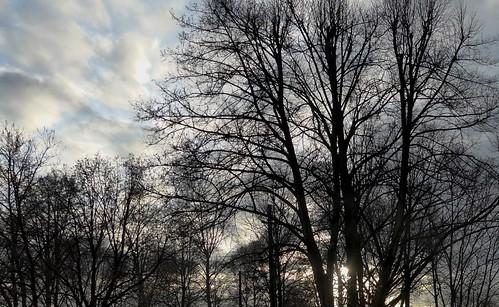 city blue autumn trees winter sunset sky tree fall nature colors weather clouds germany geotagged deutschland grey daylight europa europe december day colours sonnenuntergang herbst himmel wolken grau stadt bremen blau dezember bäume baum wetter 2015 todayinmycity