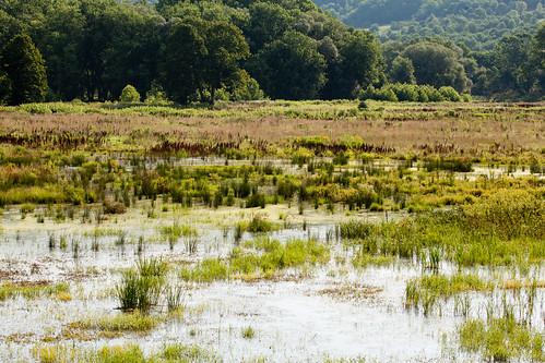 chenangocounty chesapeakebayprogram habitats ny newyork nonprofits susquehannariver unadillariver waterbodies wetlandtrust wetlands environment unitedstates exif:aperture=ƒ14 camera:model=canoneos5dmarkii camera:make=canon exif:isospeed=100 geostate exif:model=canoneos5dmarkii geo:country=unitedstates exif:focallength=100mm geocity exif:lens=ef100400mmf4556lisusm exif:make=canon