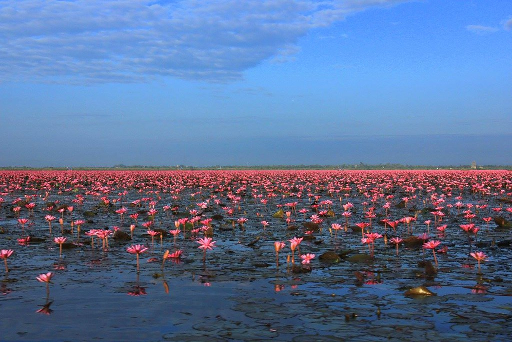 Red Lotus Sea is also an important wetland of Thailand