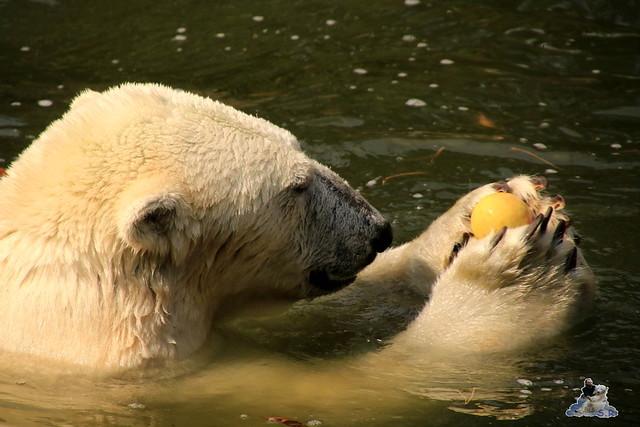 Tierpark Berlin 16.08.2015  067