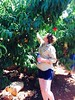 Chef Emily Seaman pinking pink lady peaches in a sacred grove at the Lebanese border in Metula.
