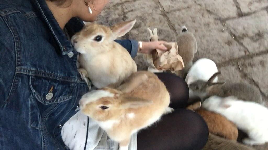 Okunoshima Japan Rabbit Bunny Island Tourist Okuno-shima rabbits bunnies cute