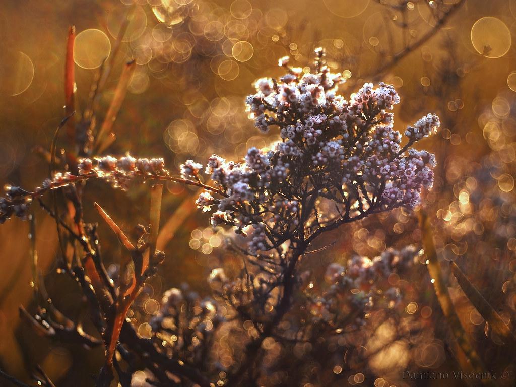 Tiny flowers_2