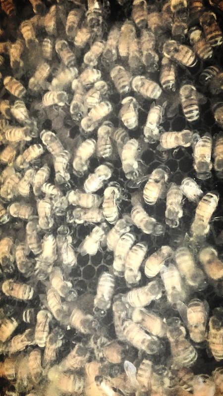 Bee Frenzy - 20150904_155208
