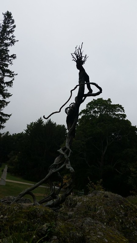 I Think I Found Groot - 20150913_154305