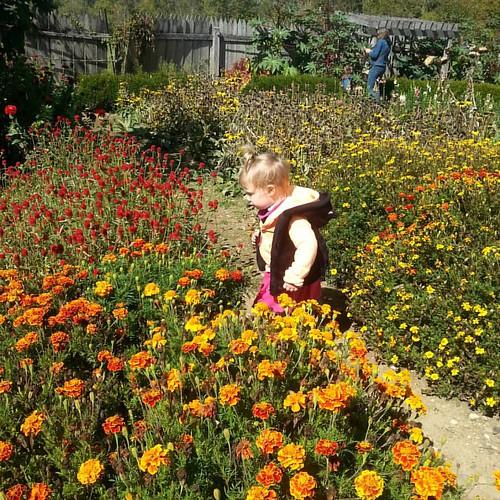 Little girl in the farm garden.