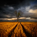 Lonely by Piotr.Krol