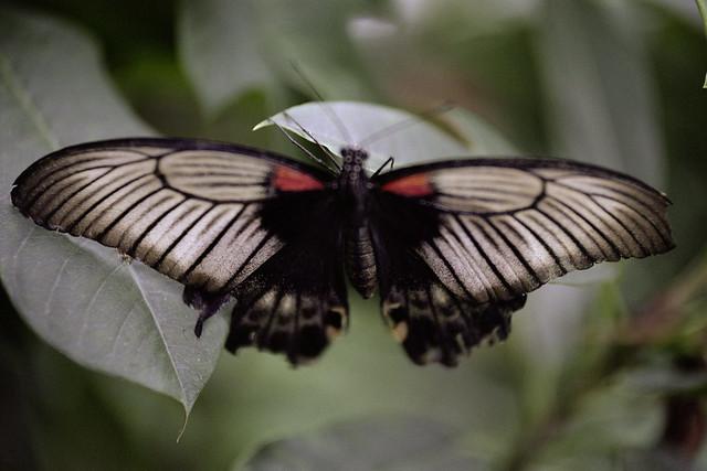 Butterfly Portra 3