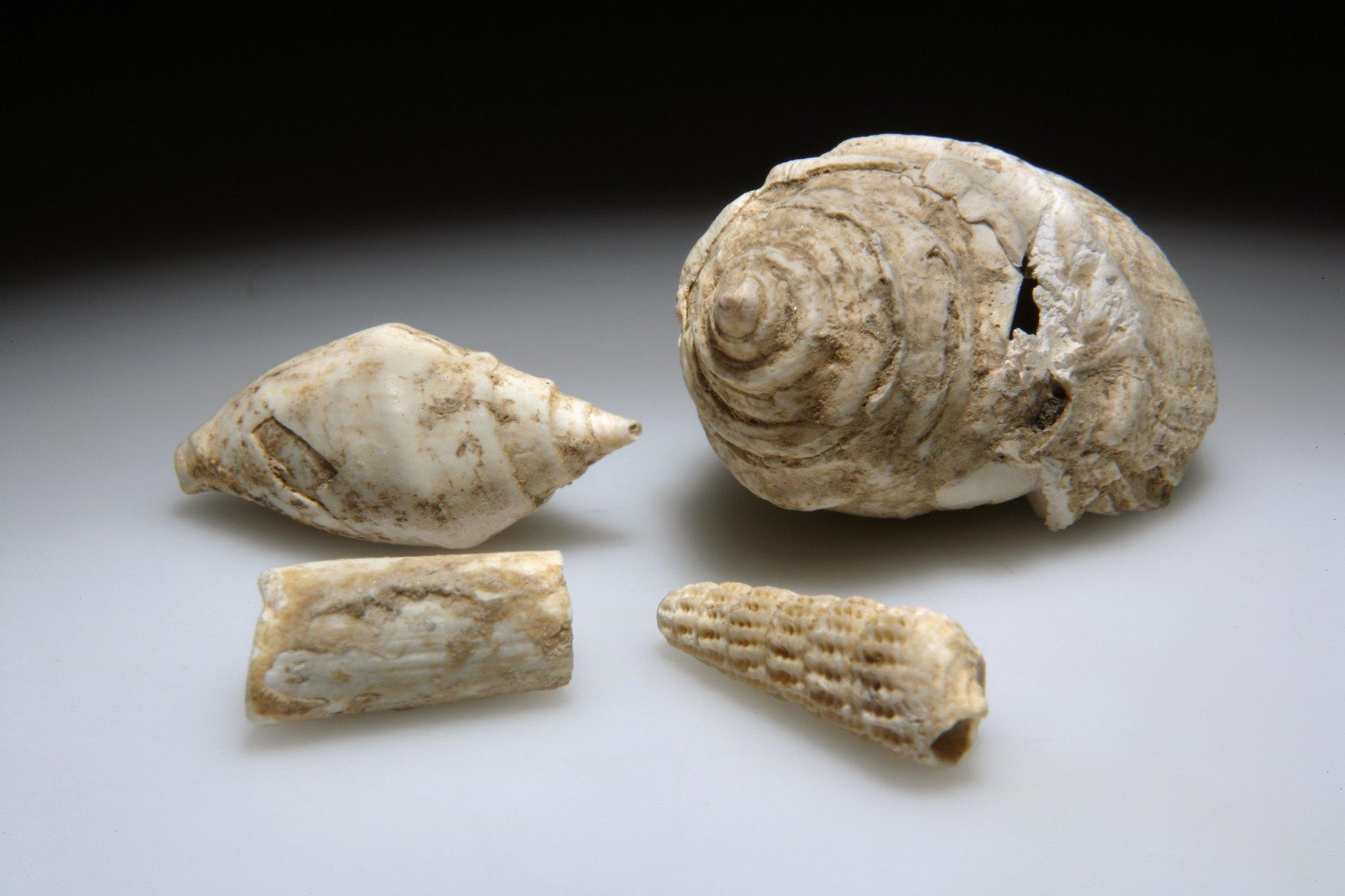 Mogyorósbánya paleolitikum 6. ábra