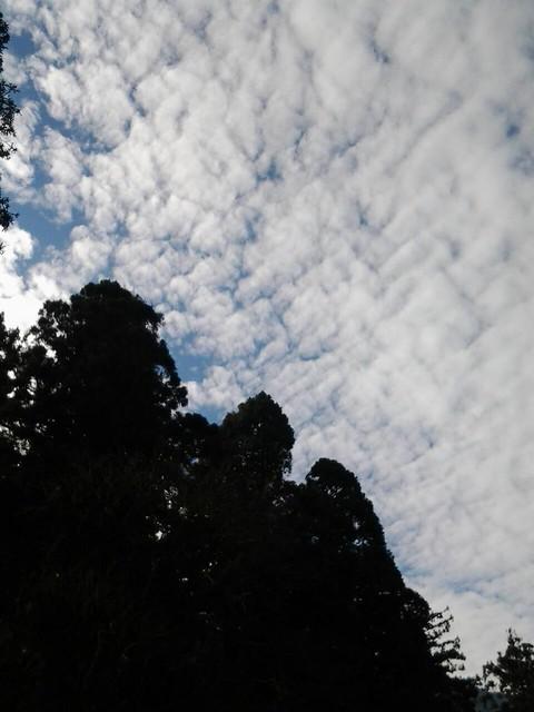 24527早晨陽光普照,下午霧茫茫。