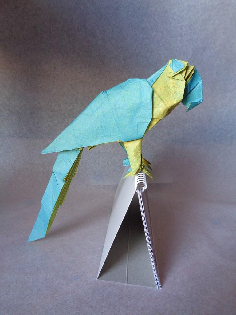 Thomas Krapf Origamis Favorite Flickr Photos Picssr Parrot Origamiorigami Macaw Parrotorigami Diagram Guacamayo Azul Y Amarillo Blue And Yellow