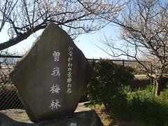 日本的梅花 2月状況 - naniyuutorimannen - 您说什么!