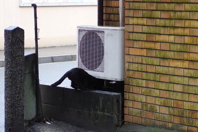 Today's Cat@2017-03-23