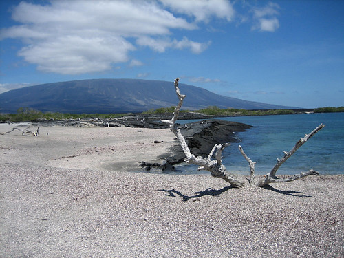 driftwood and island volcano